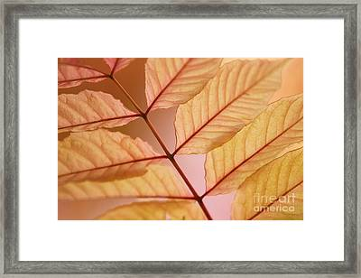 Veins Framed Print by Andrew Brooks