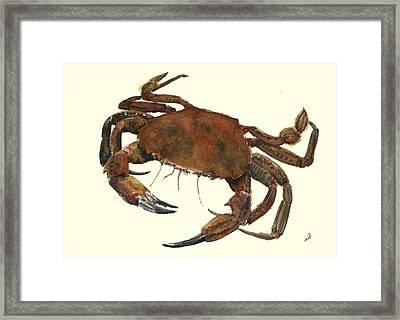 Velvet Crab Framed Print by Juan  Bosco
