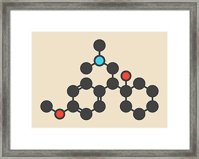 Venlafaxine Antidepressant Drug Molecule Framed Print by Molekuul