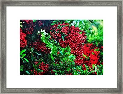 Very Berry Framed Print by Kaye Menner