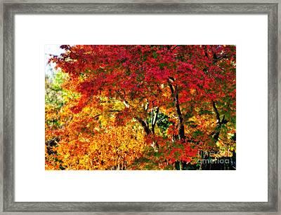 Vibrance Of Autumn Framed Print by Kaye Menner