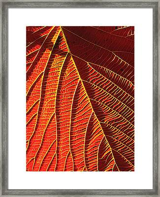 Vibrant Viburnum Framed Print by Bill Caldwell -        ABeautifulSky Photography