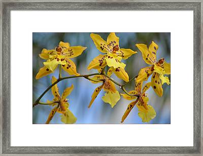 Victorian Exotic Blooms  Framed Print by Sonali Gangane