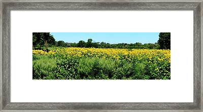 View Of A Field, Abshire Prairie Framed Print by Panoramic Images