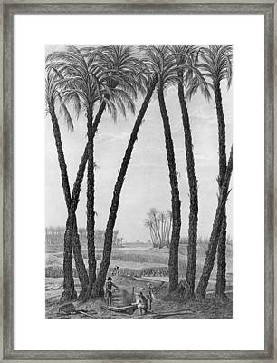 View Of The Ruins Of Memphis Seen From The South East Framed Print by Jean Louis Delignon