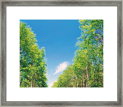 View Of Trees Against Blue Sky Framed Print by Panoramic Images