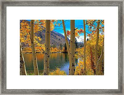 View Through The Aspens Framed Print by Donna Kennedy