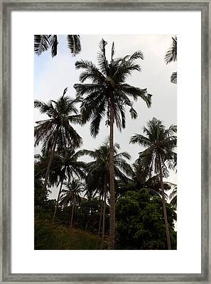 Viewpoint - Phi Phi Island - 01136 Framed Print by DC Photographer