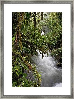 Views From Path Along River Framed Print by Thomas Wiewandt