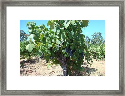 Villa Toscano Vineyards Framed Print by Susan Woodward