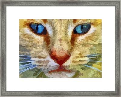 Vincent Framed Print by Michelle Calkins