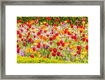 Vincent Van Gogh Style Flowerbed With Tulips And Violas Framed Print by Colin Utz