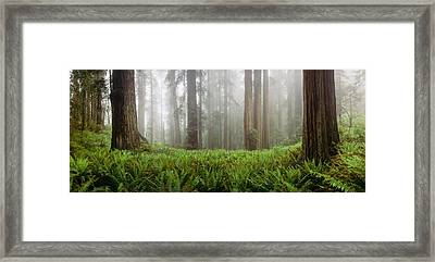Vine Maple Acer Circinatum Trees Framed Print by Panoramic Images