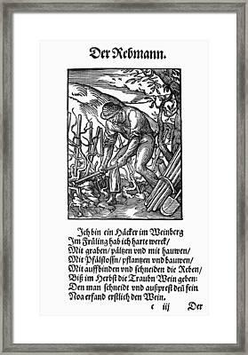Vinegrower, 1568 Framed Print by Granger