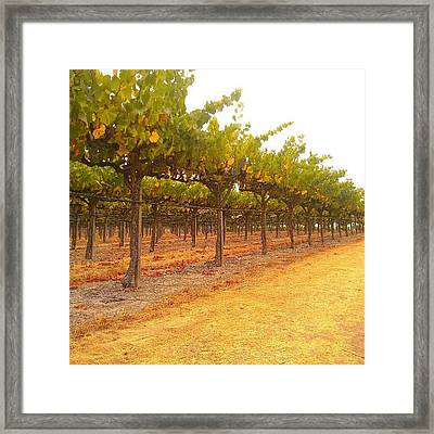 Vines Aligned Framed Print by CML Brown