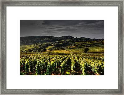 Vines In France Framed Print by Tom Prendergast