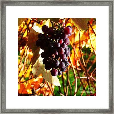 Vineyard 19 Framed Print by Xueling Zou