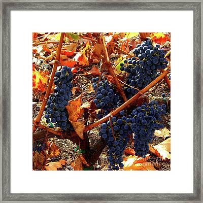 Vineyard 21 Framed Print by Xueling Zou