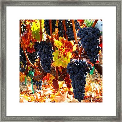 Vineyard 8 Framed Print by Xueling Zou