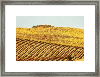 Vineyard Abstract Framed Print by Art Block Collections