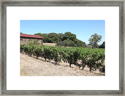 Vineyard And Stallion Barn At Historic Jack London Ranch In Glen Ellen Sonoma California 5d24579 Framed Print by Wingsdomain Art and Photography