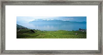 Vineyard At The Lakeside, Lake Geneva Framed Print by Panoramic Images