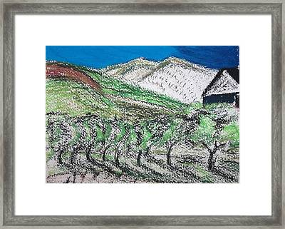 Vineyard Framed Print by Charlotte Williams