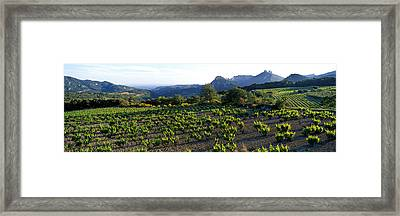 Vineyard Dentelles De Montmirail Framed Print by Panoramic Images