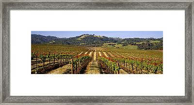 Vineyard, Geyserville, California, Usa Framed Print by Panoramic Images