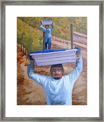 Vineyard Harvest II Framed Print by Donna Schaffer