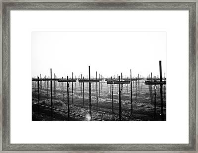 Vineyard In Fog Framed Print by Randy Bayne