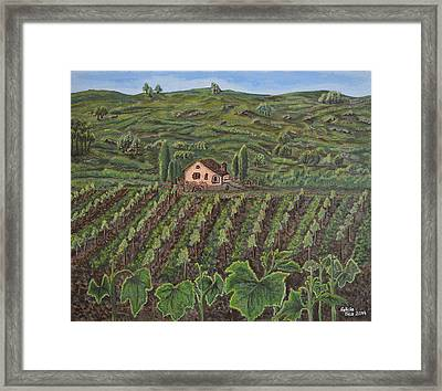 Vineyard In Neuchatel Framed Print by Felicia Tica