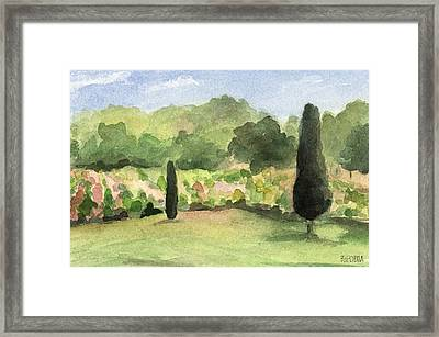 Vineyard In Provence Watercolor Paintings Of France Framed Print by Beverly Brown