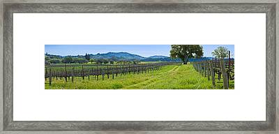 Vineyard In Sonoma Valley, California Framed Print by Panoramic Images