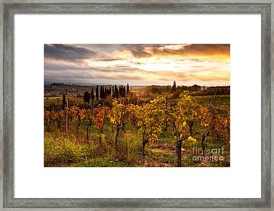 Vineyard In Tuscany Framed Print by Matteo Colombo