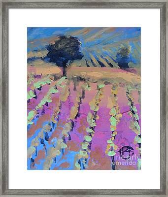 Vineyard Framed Print by Kip Decker