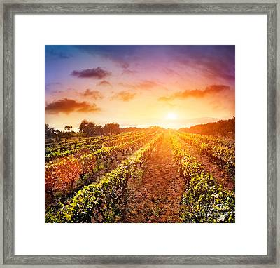 Vineyard Framed Print by Mythja  Photography