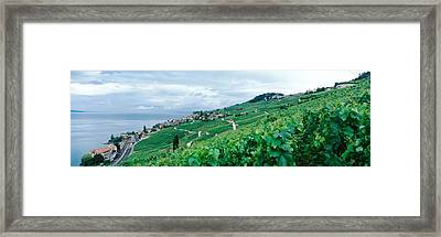 Vineyard On A Hillside In Front Framed Print by Panoramic Images