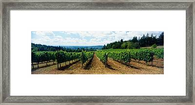 Vineyard On A Landscape, Adelsheim Framed Print by Panoramic Images