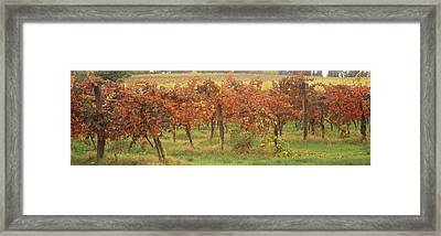 Vineyard On A Landscape, Apennines Framed Print by Panoramic Images