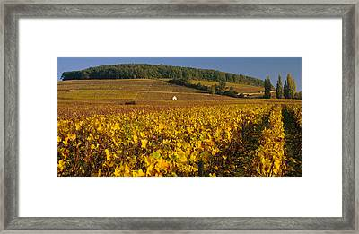 Vineyard On A Landscape, Bourgogne Framed Print by Panoramic Images