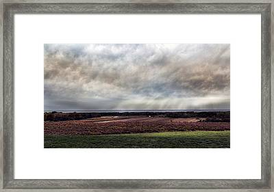 Vineyard On The Lake Framed Print by Peter Chilelli