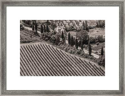 Vineyard Road Framed Print by Clint Brewer