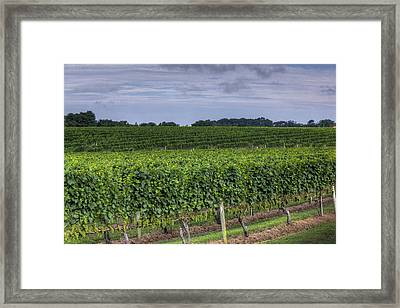 Vineyard Rows Framed Print by Steve Gravano