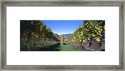 Vineyard, Sitges, Barcelona, Catalonia Framed Print by Panoramic Images