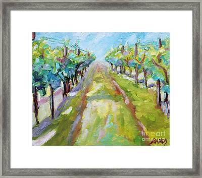 Vineyard Framed Print by Todd Bandy