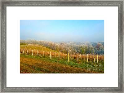 Vineyard Way Croatia Framed Print by Ann Johndro-Collins