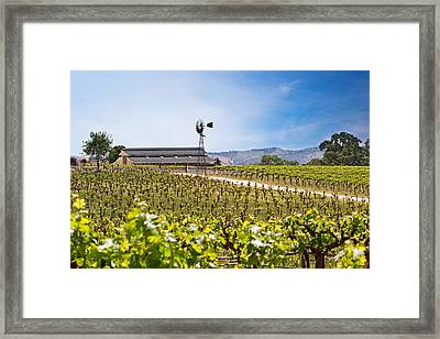 Vineyard With Young Vines Framed Print by Susan  Schmitz