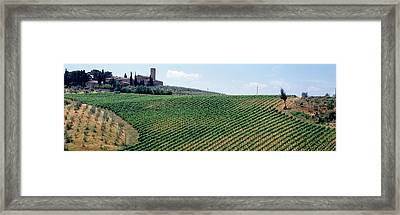 Vineyards And Olive Grove Outside San Framed Print by Panoramic Images