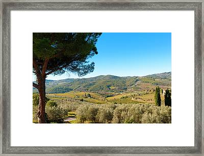 Vineyards And Olive Groves, Greve Framed Print by Nico Tondini